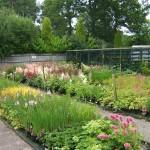 Pond Plants For Rain Gardens